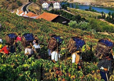 morais-vinyards-and-winery-the-winery-history-3-400x284 History